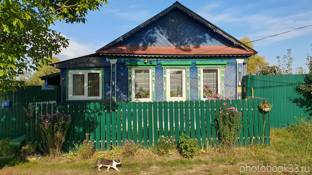 44 Домашний кот в Кольдино