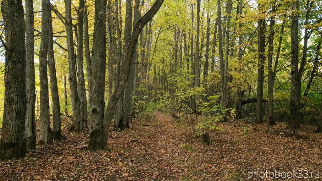 112 Природа с. Стригино, Муромский район