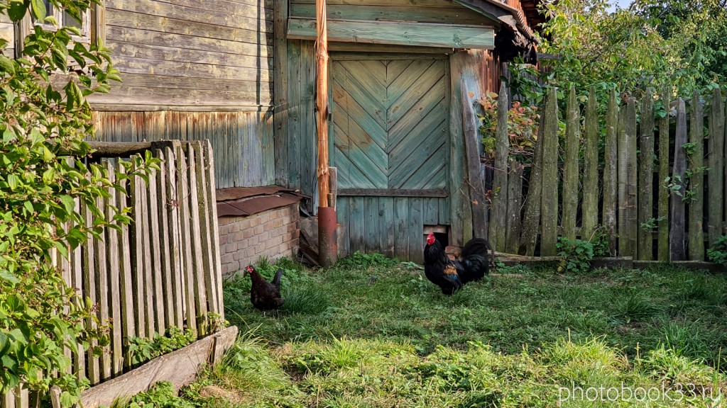 19 Куры в селе Стригино, Муромский район