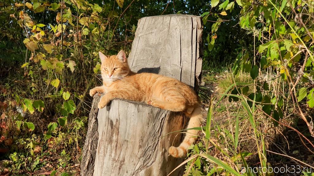 45 Коты в селе Стригино, Муромский район