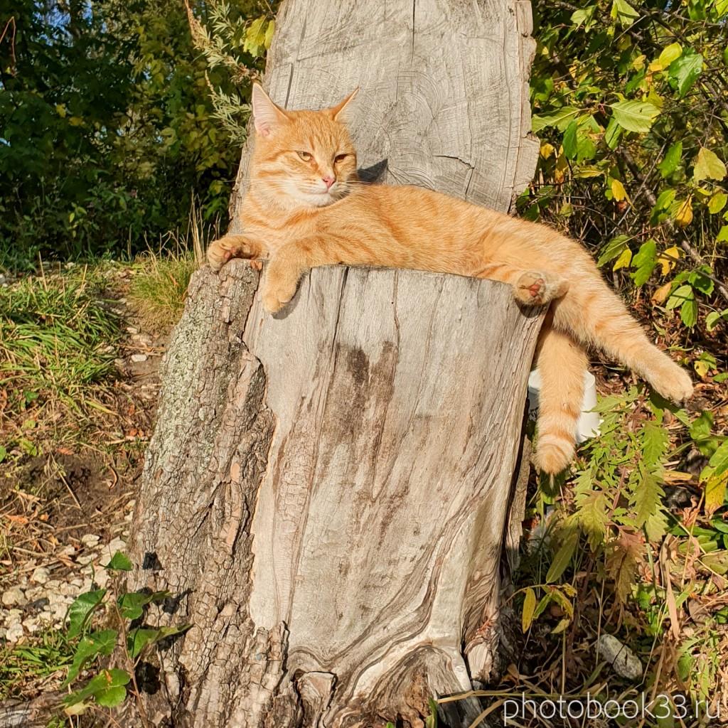 48 Коты в селе Стригино, Муромский район