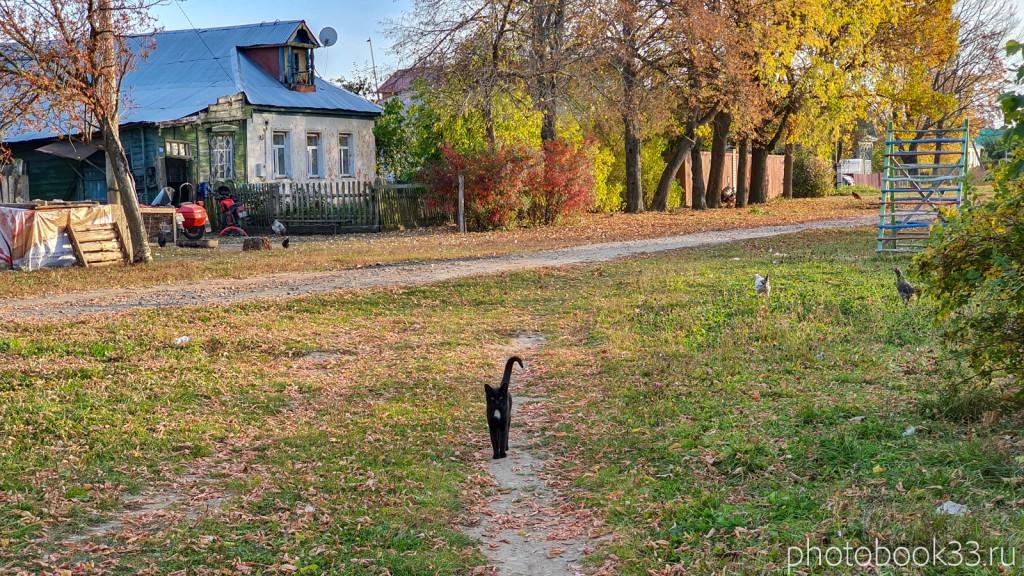 52 Черный кот в деревне Левино, Меленковский район