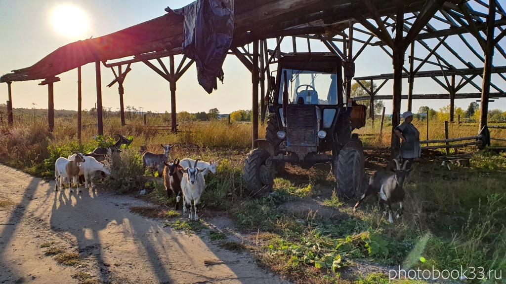 78 Животное хозяйство в с. Стригино, Муромский район