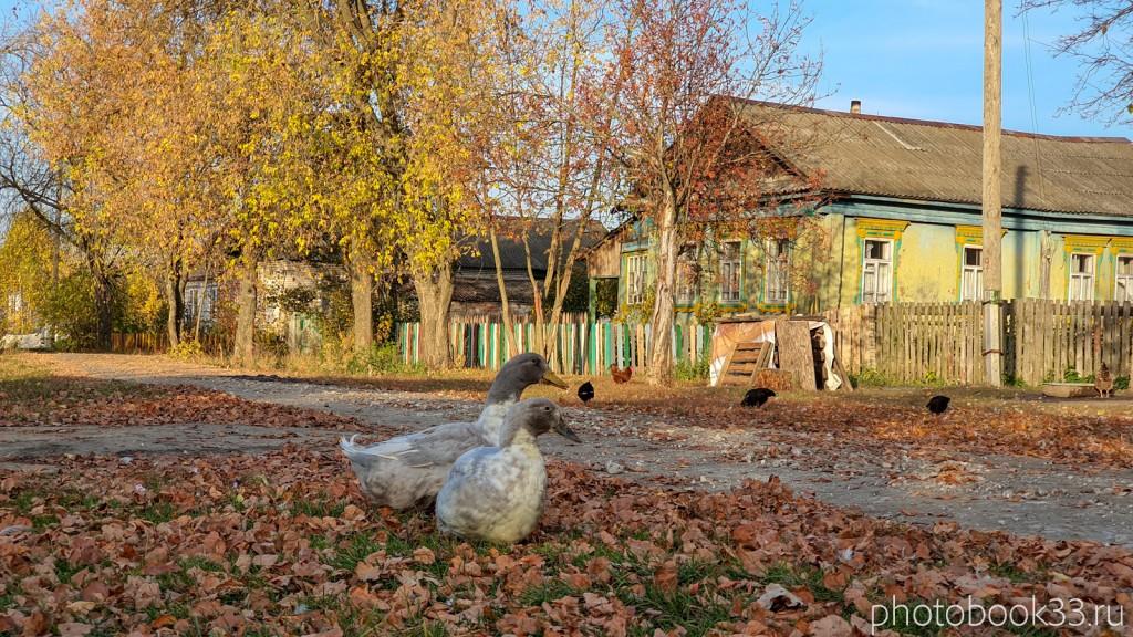 80 Гуси в д. Левино, Меленковский район