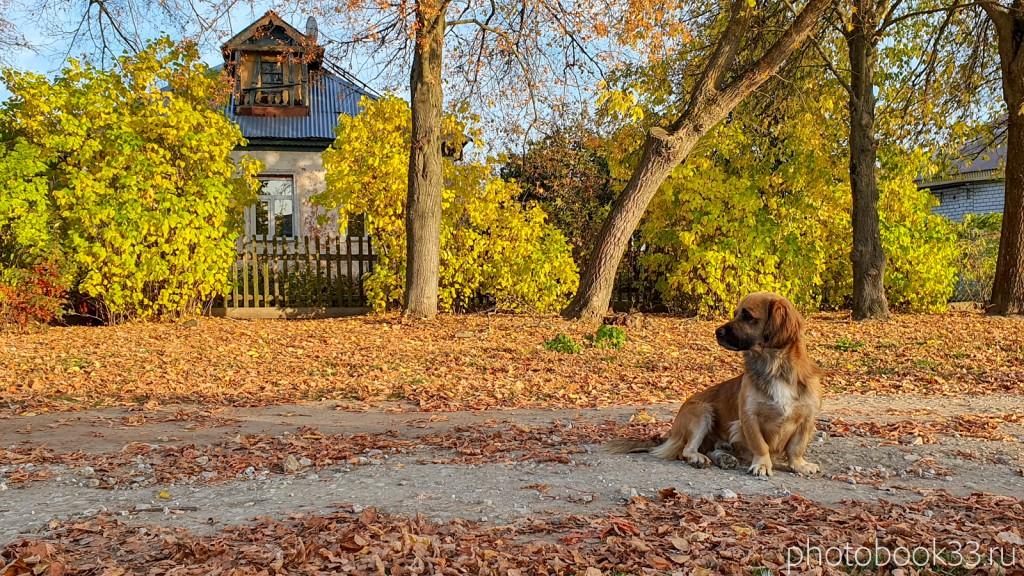 81 Домашний пёс в деревне Левино, Владимирская область